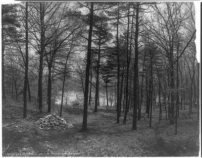 Photo of the location of Thoreau's cabin